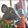In Hamtramck, not all rats are bad news