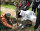 Survey finds most of the city's trees in good health