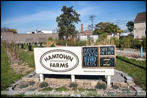 Hamtown Farms is getting ready for another growing season at their site on Lumpkin and Wyandotte.
