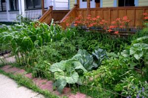 Front yard vegetable gardens were given the go-ahead at last week's city council meeting.