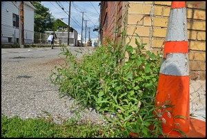 City code enforcers now have a new ordinance to go after noxious weeds.